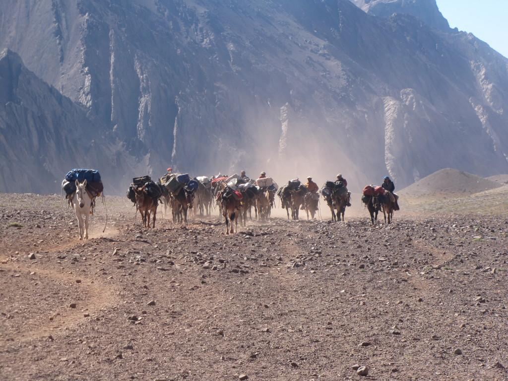 Mulas se aproximando à base do Aconcágua - Foto de Maximo Kausch